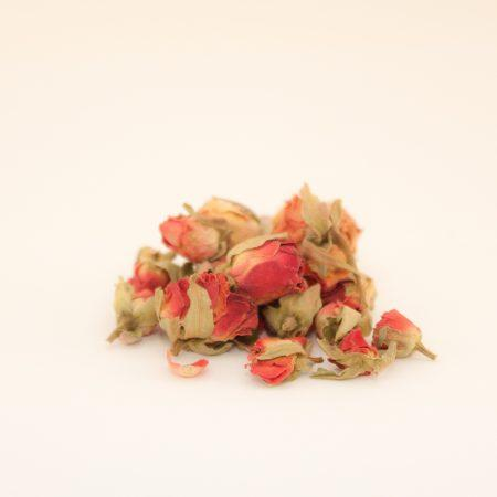 Vrtnični popki rdeči